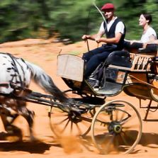 A discovery of the Luberon area and the ochre-coloured hills in a horse-drawn carriage