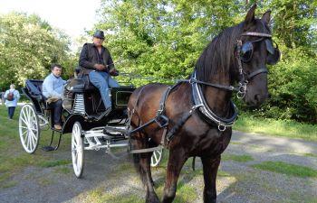 Visite en calèche des châteaux et vignobles à Margaux