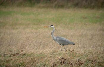 Observation des oiseaux hivernants aux environs de Toulouse
