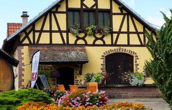 Sur la route des vins d'Alsace : initiation à la dégustation
