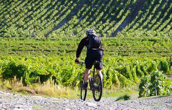 Balade à vélo et dégustation en Champagne